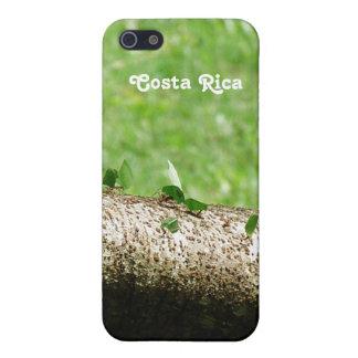 Leaf Cutter Ants in Costa Rica iPhone 5 Case