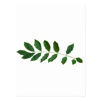 Leaf Fern Nature Party Pack Postcard