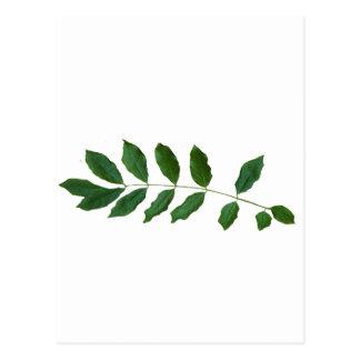 Leaf Fern Nature Party Pack Postcard