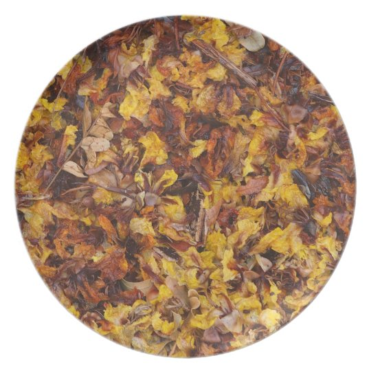 Leaf litter photo plate