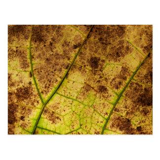 Leaf - Macro Image Fall Autumn Foliage Postcard