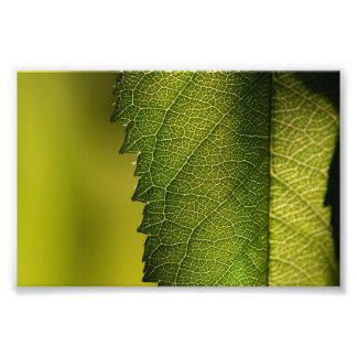 Leaf Macro Photo Print
