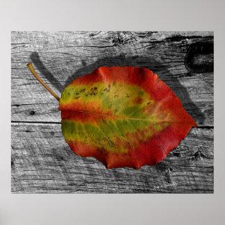 Leaf on Barnwood Poster