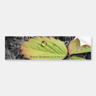 Leaf Texture and Water Droplet Bumper Stickers