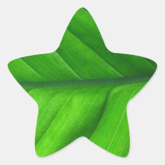 Leaf Up Close Star Sticker
