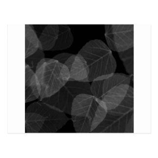 Leaf X-Ray Postcard