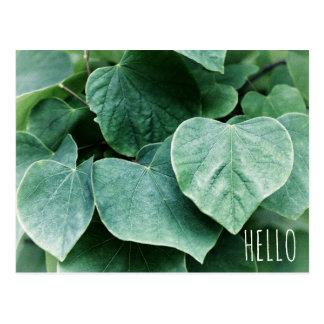 Leafy Earthy Natural Green Heart Leaf Flora Hello Postcard