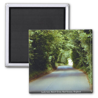 Leafy lane, Beach Cross, East Sussex, England Magnets