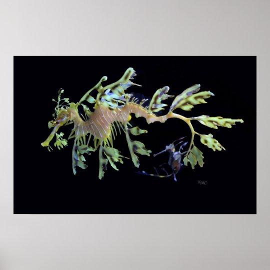 Leafy Sea Dragon & Weedy Seadragon Poster