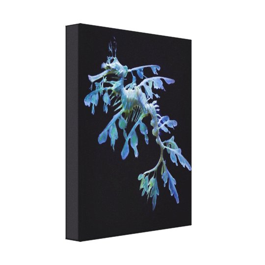 Leafy Sea Dragon Wrapped Canvas Print