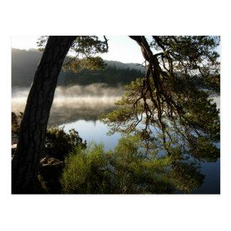 Leaning Pine at Derwenwater Postcard