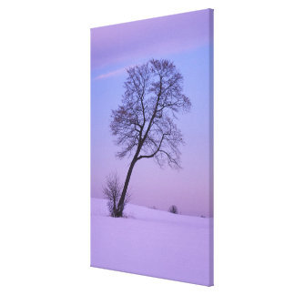 Leaning Tree in Snowy Field; Chippewa County; Canvas Print