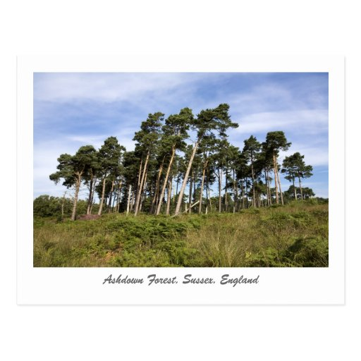 Leaning Trees On The Ashdown Forest Postcard
