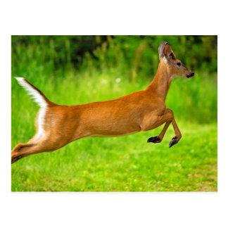Leaping Buck Postcard