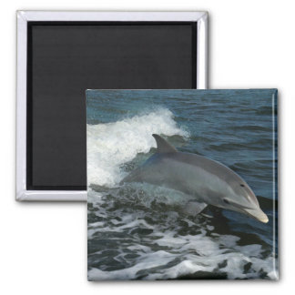 Leaping Dolphin Magnet