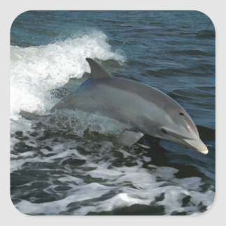 Leaping Dolphin Square Sticker