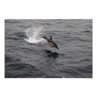 Leaping Wild Dolphin Poster