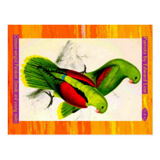 Lear. Crimson-winged Parakeet. Female & young male Postcard