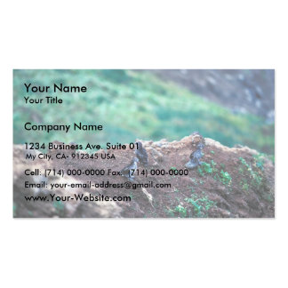 Least Auklets on Bluff Edge Business Cards