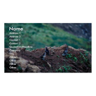 Least Auklets on Bluff Edge Business Card