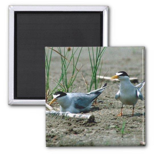 Least Terns Magnet