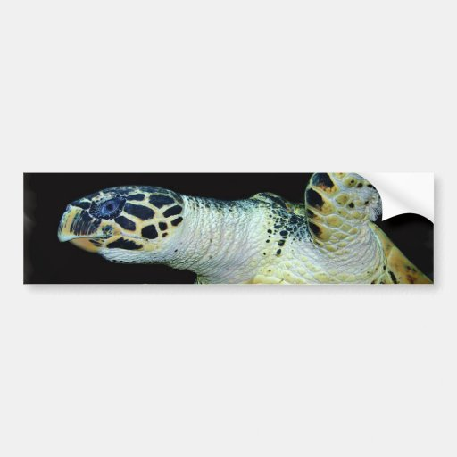 Leatherback Sea Turtle Bumper Sticker