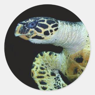 Leatherback Sea Turtle Stickers