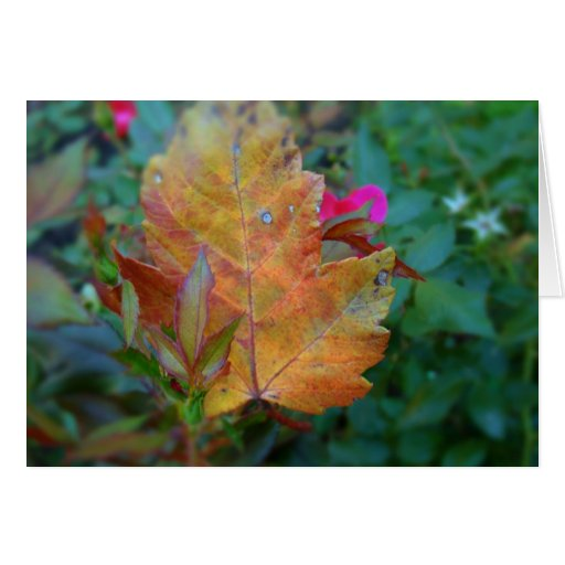 Leave of many color greeting cards