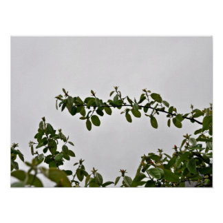 Leaves against cloudy sky print