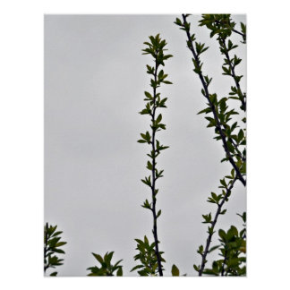 Leaves against cloudy sky print