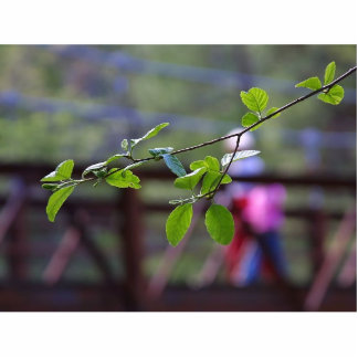 Leaves Bridges Leaf Acrylic Cut Out