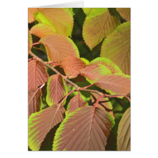 """LEAVES CHANGING COLORS"" (PHOTOG) GREETING CARD"
