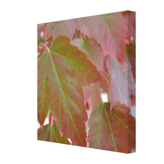 Leaves in Autumn Canvas Print