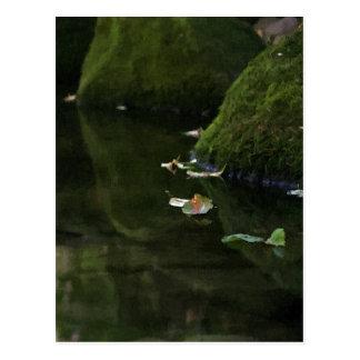 Leaves in River Pool Artwork Postcards