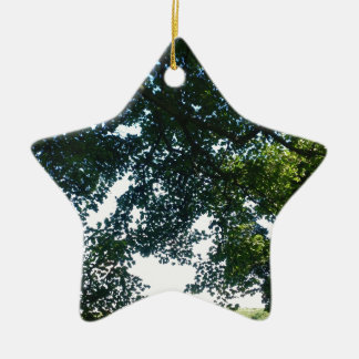 Leaves in Sunshine Ceramic Star Decoration