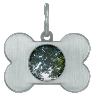Leaves in Sunshine Pet ID Tag