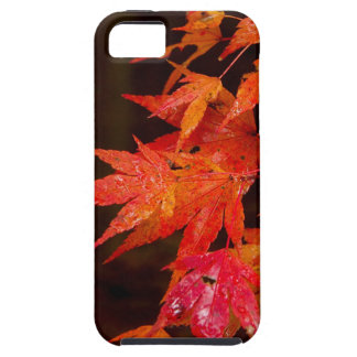 Leaves iPhone 5 Covers