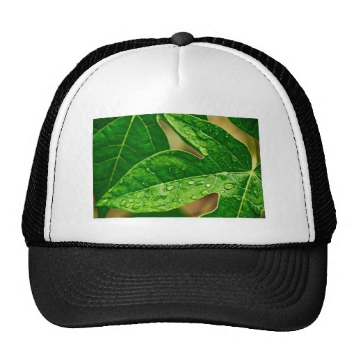 leaves me out hats