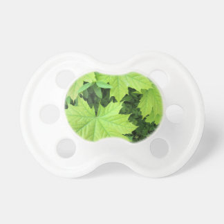 Leaves of a young maple tree on the background of baby pacifiers