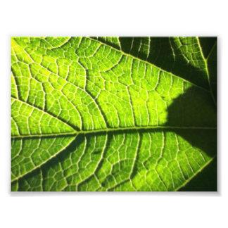 Leaves of Green Photo Art