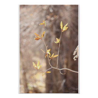 Leaves of Willow Poster