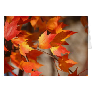 Leaves on Fire Notecard