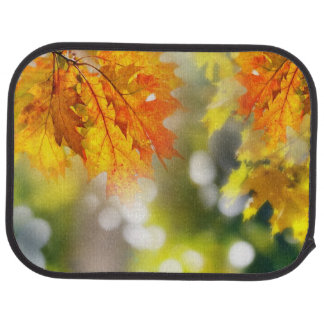Leaves on the branches in the autumn forest car mat