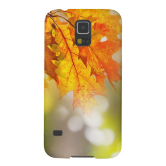 Leaves on the branches in the autumn forest case for galaxy s5