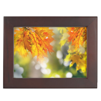 Leaves on the branches in the autumn forest keepsake box