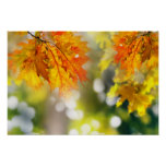 Leaves on the branches in the autumn forest poster