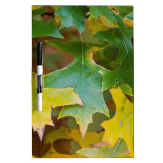 leaves on tree in autumn dry erase board