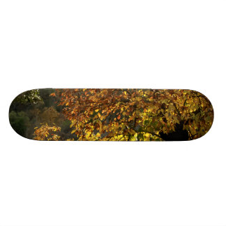 Leaves sea breams of the chestnut tree in autumn i skate boards