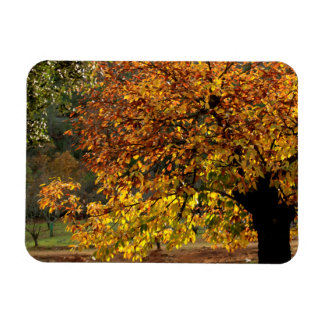 Leaves sea breams of the chestnut tree in autumn rectangular photo magnet