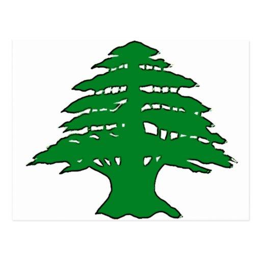 Lebanese Cedar Post Cards